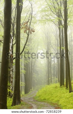 Trail in the deciduous forest on a foggy rainy morning. - stock photo