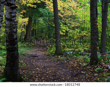 Trail in the fall forest in minnesota