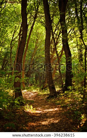 Trail in the forest - stock photo