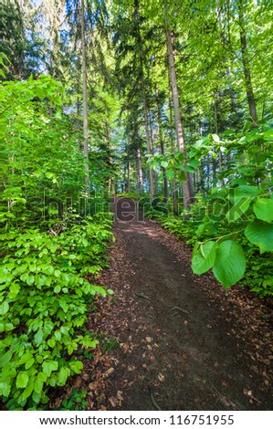 Trail in the green wood.