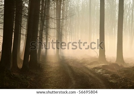 Trail in the misty forest at dawn at the beginning of spring. - stock photo
