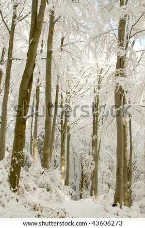 Trail in the mountains leading among beech trees covered with snow in very cold day. - stock photo