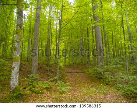 Trail in the Pine forest of Switzerland.
