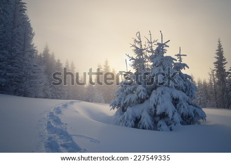 Trail in the snow. Christmas landscape in a mountain forest. Sun shines through the fog - stock photo