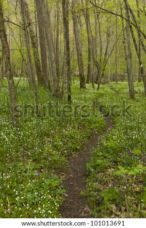 Trail in woods during spring. - stock photo