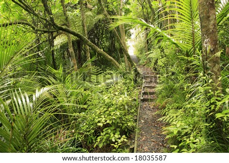 Trail inside tropical forest