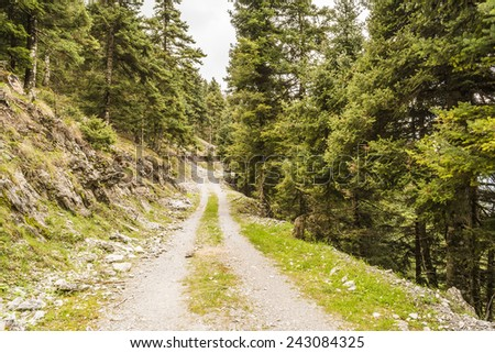 Trail passing through green forest  - stock photo