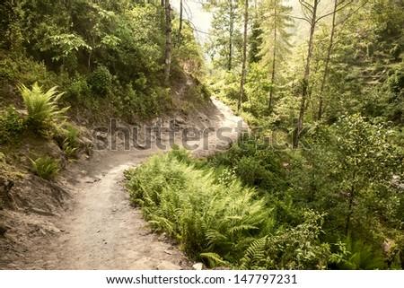 trail passing through nepal woods near lukla - stock photo