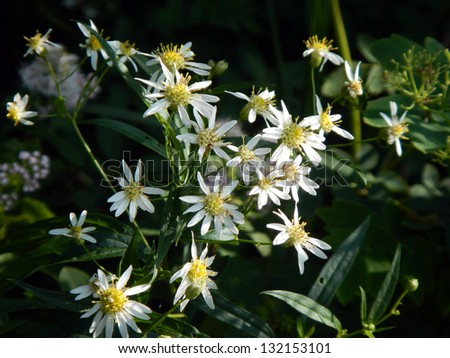 Trail-side wildflowers - stock photo