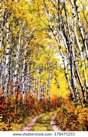 Trail through Aspen grove in Saslatchewan Canada - stock photo
