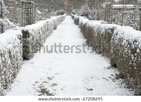 Trail Through Hedgerow on a  Snowy Winter Day - stock photo