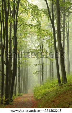 Trail through misty autumn forest. - stock photo