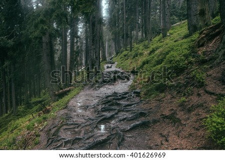 trail through the european forest in bad weather