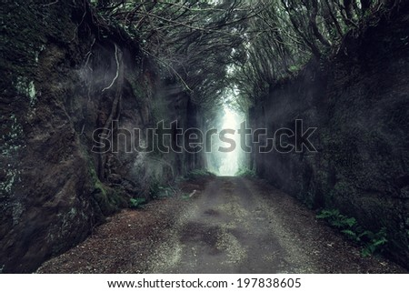trail through the wood - stock photo