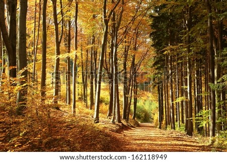Trail through the woods in bright colors of autumn. - stock photo