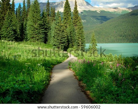Trail Through the Woods in the Canadian Rockies - stock photo
