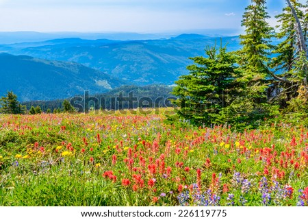 Trail to a mountan summit in British Columbia, Canada. - stock photo