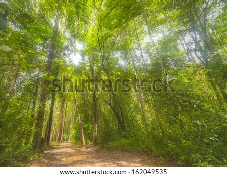 trail to study forest ecology - stock photo