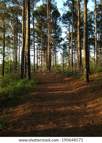 Trail to the Puskus Lake dam in Holly Springs National Forest, Mississippi - stock photo