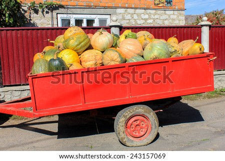 Trailer full of pumpkins - stock photo