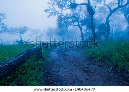 Trails in tropical forests in Thailand during the rainy season. - stock photo