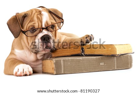 trained dogs in glasses with books - stock photo