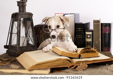 trained dogs in glasses with books