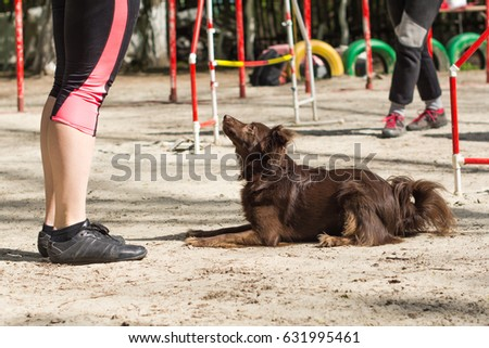 Training dogs to lie up.  Agility - Dog skill competition
