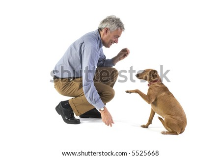 Training obedience by the little brown dog - stock photo