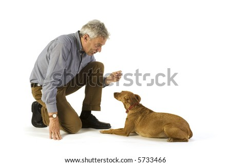 training obedience command lay down by the dog - stock photo