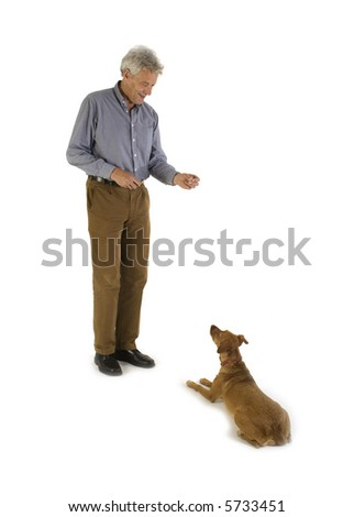 training obedience with a little brown dog - stock photo