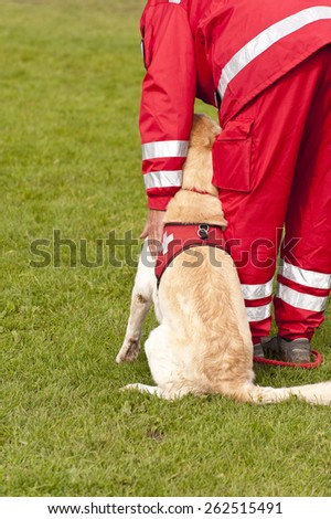 Training of a Rescue Dog Squadron - stock photo