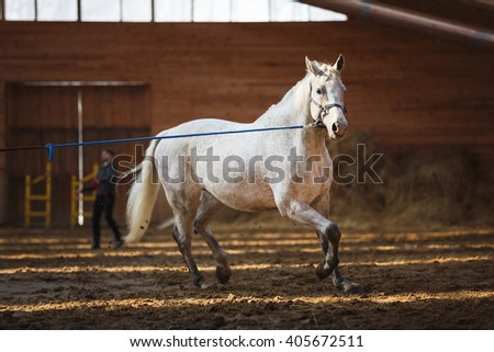 Training of sport horse in the arena