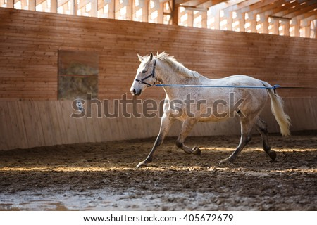 Training of sport horse in the arena - stock photo