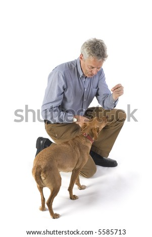 training the dog for obedience with rewards - stock photo
