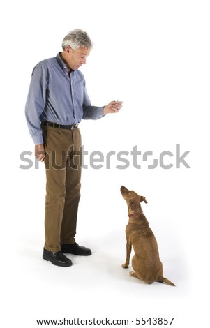training the little brown dog with rewards - stock photo