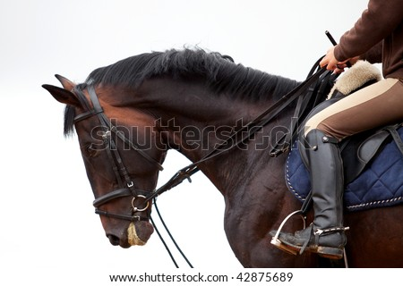 Training: young girl riding on bay horse in rain at platz - stock photo