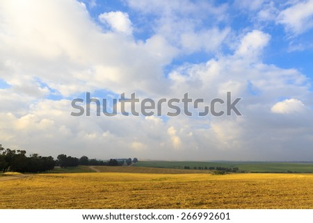 Tranquil field of harvested wheat with a blue sky and clouds - stock photo