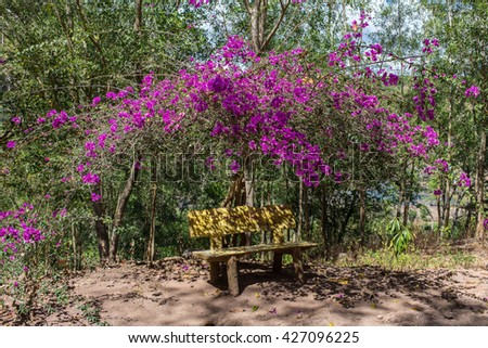 Tranquil garden bench surrounded by cherry blossom trees - stock photo