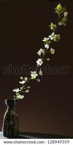 Tranquil night scene. White cherry blossoms with dark background. - stock photo
