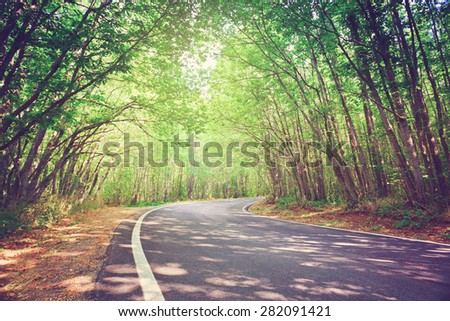 Tranquil road towards Gambarie d'Aspromonte in Calabria. Trees create a green tunnel.  - stock photo