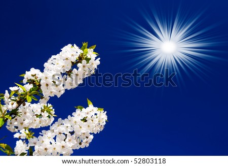 Tranquil scene  blossom cherry tree by spring. - stock photo