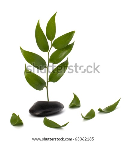 Tranquil scene. Green leaf and stones isolated on white background.