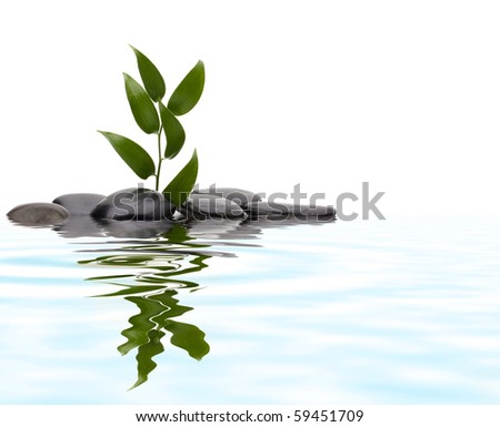 Tranquil scene. Green leaf and stones with reflection. - stock photo