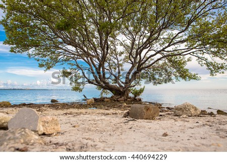 Tranquil   scene on best desert beach of Miami  with white sand on ocean  in tropical Key Biscayne. Wood benches with no people under shady big tree. Travel and vacations in Miami, Florida, USA. - stock photo