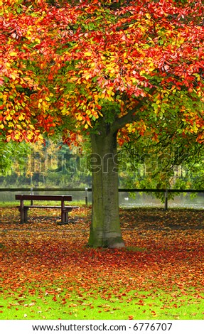 Tranquil Scene with Park Bench overlooking the River as Autumn leaves fall - stock photo