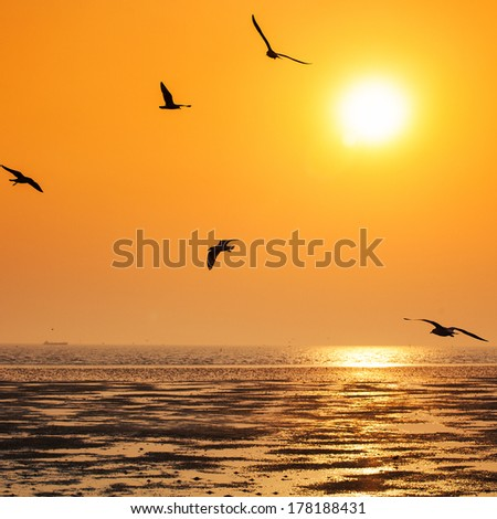 Tranquil scene with seagull flying at sunset