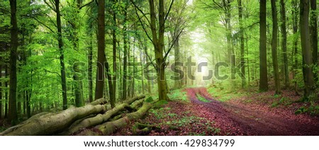Tranquil spring forest scenery with a path inviting to take a relaxing walk, with beautiful soft light - stock photo