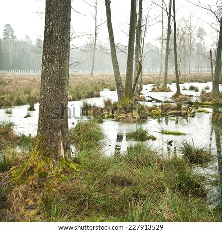 tranquil swamp near the forest - stock photo