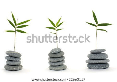 tranquil view of bamboo leaf with a stack of stones